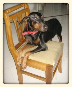 scaredy-cat Fido (2002-2011)