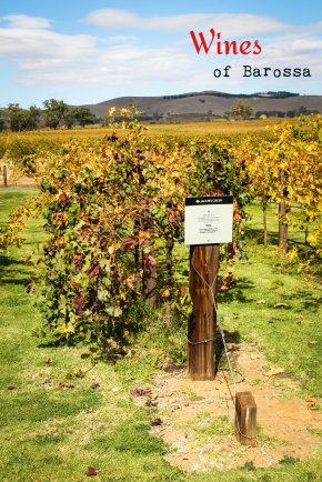 Wines of Barossa: Visit to the Jacobs Creek Visitor Centre