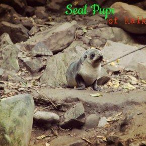 #BlogAlong + Seal Pups of Kaikoura, NewZealand