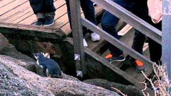 Penguins: Image taken from Google